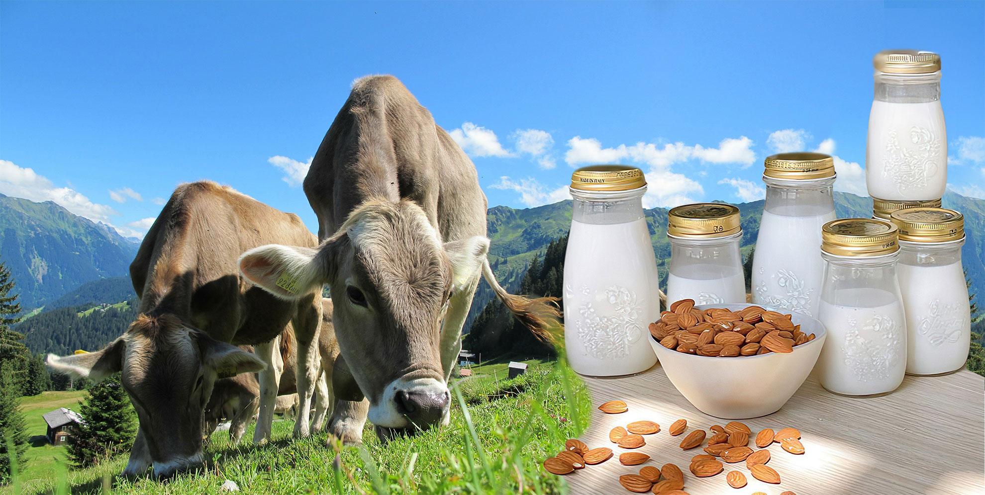 Plant Fats v.s. Dairy Fats