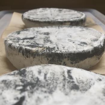 artisan plant-based vegan Brie style cheese Casjubert-4 Ashed