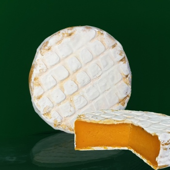 artisan plant-based vegan Brie style cheese Casjubert-2 SpiZe